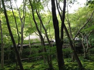 2013heike-kyoto134.JPG