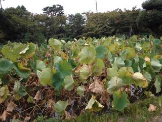 2013heike-kyoto191.JPG