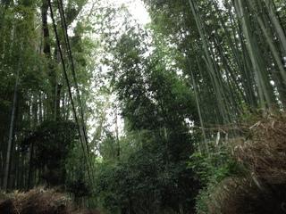 2013heike-kyoto92.JPG